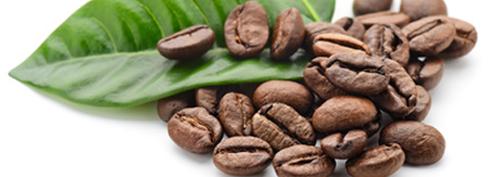 Café en grains1